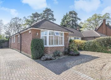 Thumbnail 4 bedroom bungalow for sale in Ascot, Berkshire