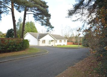 Thumbnail 4 bed detached bungalow for sale in Merriefield Avenue, Broadstone
