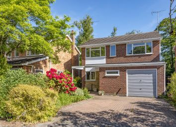 Thumbnail 4 bed detached house to rent in Ascot, Berkshire
