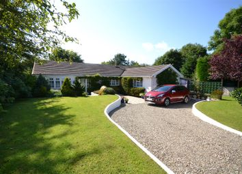 Thumbnail 6 bed detached bungalow for sale in Llanarth