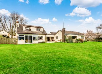 Beech Tree Lane, Ipplepen, Newton Abbot TQ12. 4 bed detached bungalow for sale