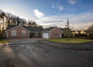 Thumbnail 4 bed bungalow for sale in Old Coach Avenue, Belfast