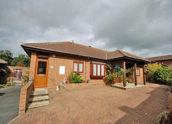 Thumbnail 3 bed semi-detached bungalow to rent in Treetops, Talar Deg, Llanilar