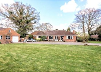 Thumbnail 5 bed detached bungalow to rent in Ashford Road, Staines-Upon-Thames, Surrey