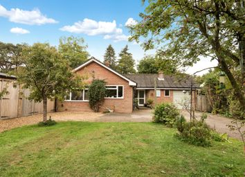 Thumbnail 4 bed detached bungalow for sale in Lymington Bottom, Four Marks, Alton