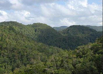 Thumbnail Land for sale in Savanna-La-Mar, Westmoreland, Jamaica