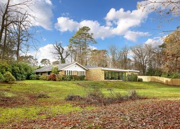 Thumbnail 4 bed bungalow to rent in Shepley End, Wentworth, Berkshire