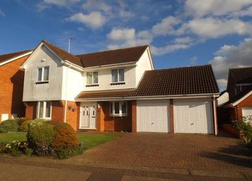 Thumbnail 4 bed detached house for sale in The Drive, Peterborough, Cambs