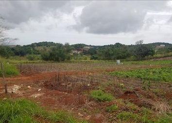 Thumbnail Land for sale in St. Elizabeth Parish, Jamaica