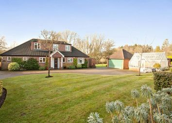 Thumbnail 6 bed detached house to rent in Farley Green, Albury, Guildford, Surrey