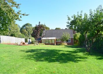 Thumbnail Detached bungalow for sale in East Budleigh, Budleigh Salterton, Devon