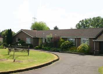 Thumbnail 4 bed detached bungalow to rent in Wintershill, Durley, Southampton
