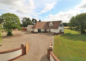 Thumbnail 4 bed detached house to rent in Alresford Road, Colchester, Essex