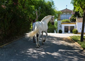 Thumbnail 6 bed country house for sale in Seville, Spain