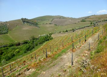 Thumbnail Farm for sale in 20Ha Wine Estate, Portugal Douro, Santa Marta De Penaguião, Vila Real, Norte, Portugal
