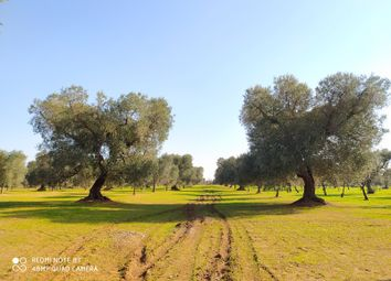 Thumbnail Land for sale in Sp35, Carovigno, Brindisi, Puglia, Italy