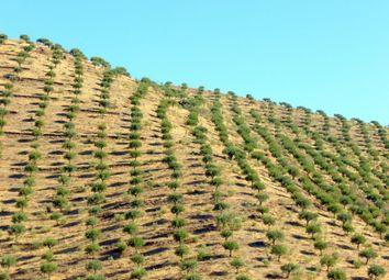 Thumbnail Land for sale in Figueira De Castelo Rodrigo, Guarda, Central Portugal
