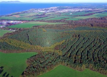Land for sale in Flimby Great Wood, By Flimby, Cumbria CA15