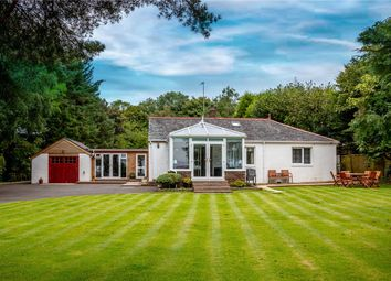 Thumbnail 4 bed semi-detached house for sale in The Coach House, Hollybush, Ayr