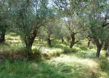 Thumbnail Land for sale in Strada Vicinale Arcagna - Da 539, Dolceacqua, Imperia, Liguria, Italy
