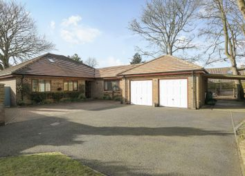 Thumbnail 5 bed detached bungalow for sale in Mill Lane, Shepherdswell, Dover