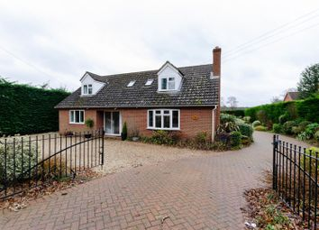 Thumbnail 5 bedroom detached bungalow to rent in Shortthorn Road, Stratton Strawless, Norwich
