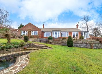 Thumbnail 3 bedroom detached bungalow to rent in Woodhouse Lane, Holmbury St. Mary, Dorking, Surrey