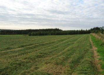 Thumbnail Land for sale in Bogfold, New Pitsligo
