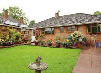 Thumbnail 3 bedroom semi-detached bungalow to rent in Petersfield Road, Ropley, Alresford