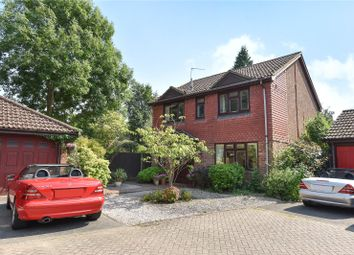 Thumbnail 4 bed detached house to rent in Badgers Copse, Camberley, Surrey
