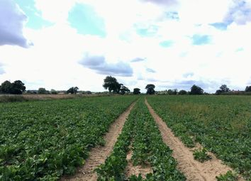 Thumbnail Commercial property for sale in Land At Bergh Apton, Bergh Apton Road, Norwich, Norfolk