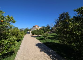 Thumbnail 1 bed farmhouse for sale in V111, Amendoeira, Portugal