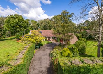 Thumbnail 4 bed detached bungalow for sale in Woodlands Drive, Capel, Dorking, Surrey