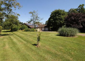 Thumbnail 4 bed bungalow for sale in The Paddock, Emberton, Olney
