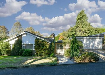 Thumbnail 4 bed detached bungalow for sale in Birchfield Grove, Epsom, Surrey