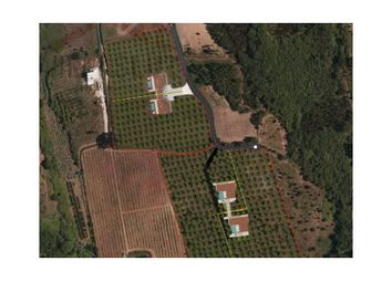 Thumbnail Land for sale in Alcobaça E Vestiaria, Alcobaça E Vestiaria, Alcobaça