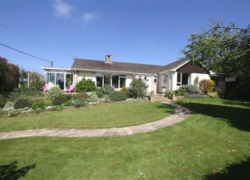 Thumbnail 4 bed detached bungalow for sale in Studley Hill, Studley, Wiltshire