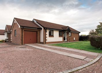Thumbnail 3 bed detached bungalow for sale in Anne Arundel Court, Dumfries