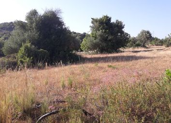 Thumbnail Land for sale in Murta, Estoi, Faro, East Algarve, Portugal
