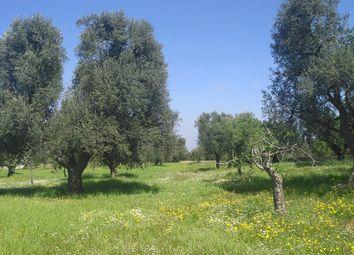 Thumbnail Land for sale in Via Specchia, Carovigno, Italy
