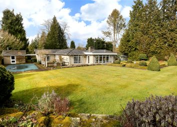 Thumbnail 4 bed detached bungalow for sale in Guildford Road, Shamley Green, Guildford, Surrey