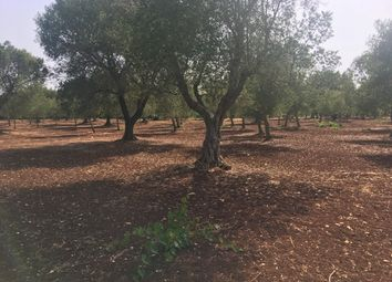Thumbnail Land for sale in Ostuni, Puglia, Italy