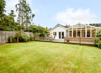 Thumbnail 4 bedroom bungalow for sale in Kiln Lane, Winkfield, Windsor, Berkshire