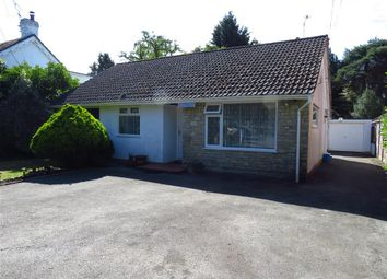 Thumbnail 4 bed bungalow to rent in Sandy Lane, St. Ives, Ringwood