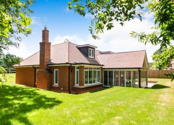 Thumbnail 4 bedroom bungalow for sale in Gasden Copse, Witley, Godalming