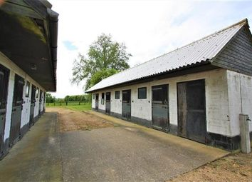 Thumbnail Equestrian property to rent in Highfields, Kirtling Road, Saxon Street, Newmarket