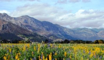Thumbnail Leisure/hospitality for sale in Iconic Cape Winelands Wine Farm & Estate, South Africa