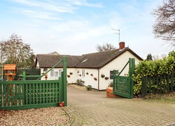 Thumbnail 4 bed detached bungalow for sale in Stoke Road, Poringland, Norwich, Norfolk
