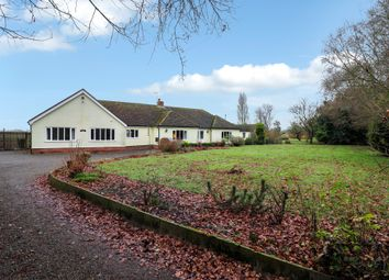 Thumbnail 4 bed detached bungalow for sale in Chattisham, Ipswich, Suffolk