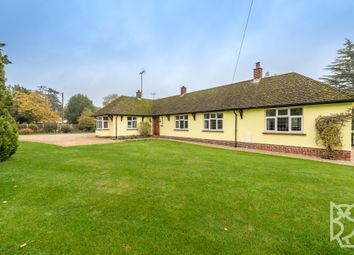 4 bed detached bungalow for sale in Church Road, Gosfield, Halstead, Essex CO9
